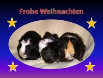 Weihnachtspostkarte Meerschweinchen Trio von kattobello