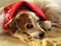 Hund mit Weihnachtsmütze by assy