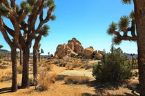 Joshua Tree by fotoping
