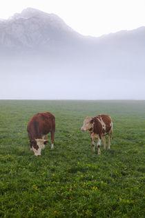Weide in Bayern by Bernhard Kaiser