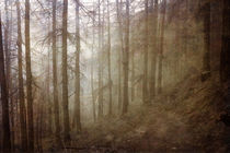 Into the Wild by Kreativ Corner