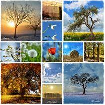Das Jahr - Monat für Monat  durch die Natur  by Claudia Evans
