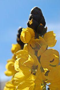 Blütenzauber... 2 von loewenherz-artwork