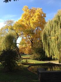 goldener Herbst by galerie artgero