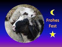 Weihnachtspostkarte kuschelnde Schafe von kattobello
