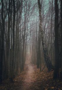 Stay on the path von Nuno Borges