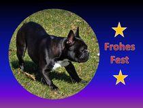 Weihnachtspostkarte Französische Bulldogge von kattobello