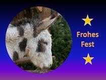Weihnachtspostkarte Esel Profil von kattobello