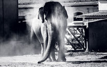 Staubiger Elefant by Alexander Dorn