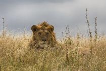 Lion King von Sabrina Reichmuth