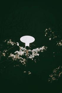 Laterne in der Nacht  von Bastian  Kienitz