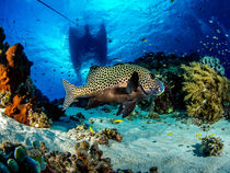 Leben am Korallenriff by Sascha Caballero