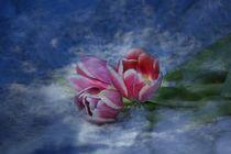 Zarte Tulpen  by Claudia Evans