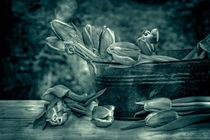 Tulips von Claudia Evans