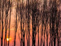 Sonnenuntergang mit Bäumen im Winter von Detlef Koethner