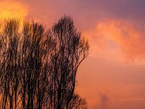 Winter Abendstimmung Bäume von Detlef Koethner