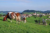 Schweizer Kühe... 1 von loewenherz-artwork