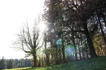 Sonnentanz um den Wald by Marco Lermer