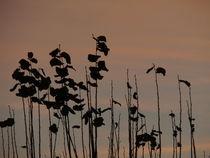 Herbstzeitlose von Betti Caspar