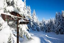 Winterweg im Oberharz von Andreas Levi