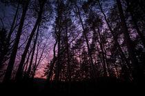 Wald Silhouetten von Gerhard Kopatz