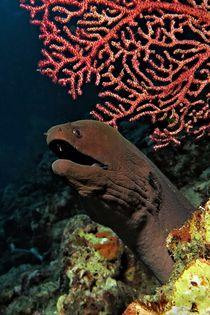 Wächter der Koralle von Andre Philip
