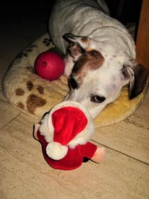 ...bist Du der Weihnachtsmann...soo klein ??? by assy
