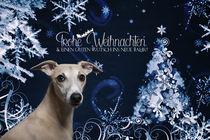 Whippet-Weihnacht by Heidi Bollich