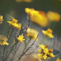 Among the Wild Daisies von Karen Black