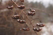 winter frost  by Gytaute Akstinaite