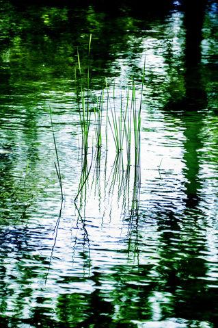 Wasser-2jpeg