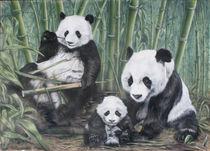Pandas von Alexey Kurkin