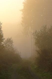 Herbstmorgen im Wald by Bernhard Kaiser