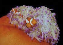 Nemo ́s zu Hause by Andre Philip