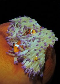 Nemo in Familie by Andre Philip