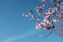 Frühlingserwachen von Jing Zhou