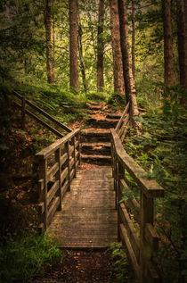 Woodland Bridge At Thirlmere von Ian Lewis