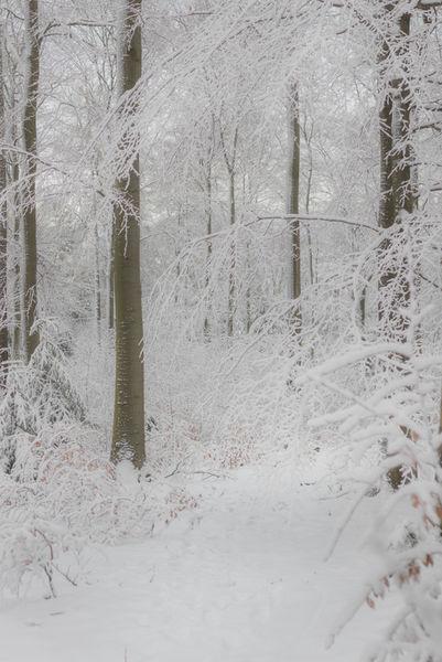 Winterwald-1-von-1