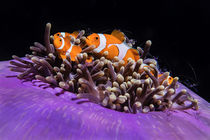finding Nemo von Daniel Dietrich