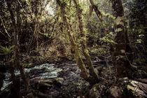 Der Urwald von El Nicho by Doreen Reichmann