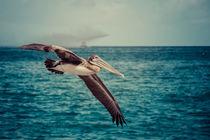 Pelikan von Doreen Reichmann