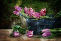 Tulips still life   -  Tulpen Stillleben von Claudia Evans