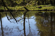 Baumspiegelung im Fluss nebenan von Marco Lermer