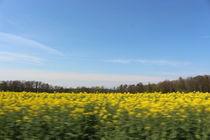Sonnenblumen Feld zu einem schönen Sommertag von Marco Lermer