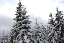 Winter im Wald 2 by male87creative