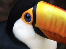 Toucan Close-Up by Annika  Leichtweiss