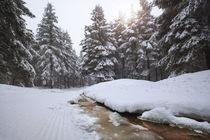 Kleiner Bach im Winterwald by micha-trillhaase-fotografie