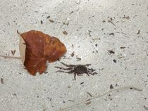 A Crab and a Leaf on the Beach by Annika  Leichtweiss