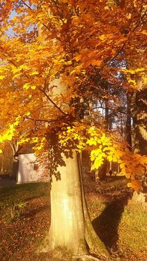Herbst-Gold 1... by Rena Rady