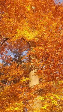 Herbst-Gold  von Rena Rady